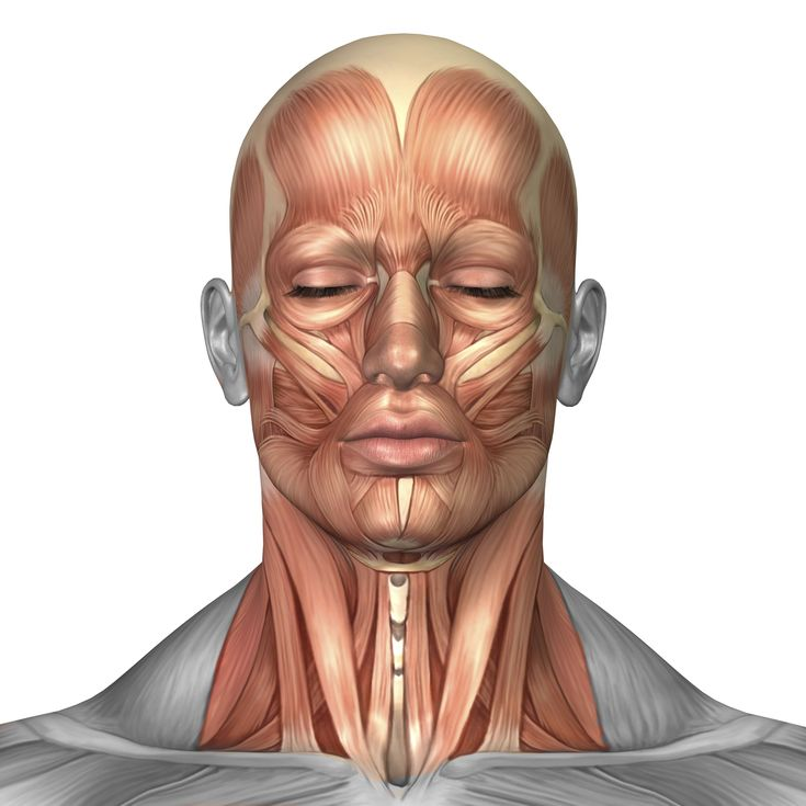 Sternocleidomastoid Muscle | Healing Therapies by Vatché Papazian
